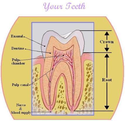 Tooth_cdp.JPG